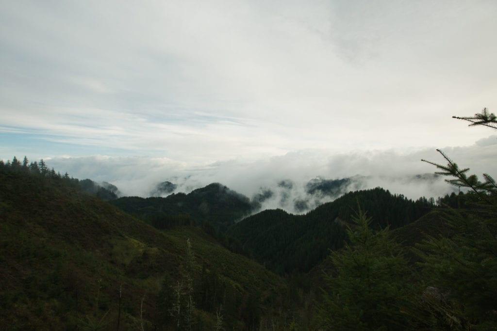 Elliot State Forest in Oregon