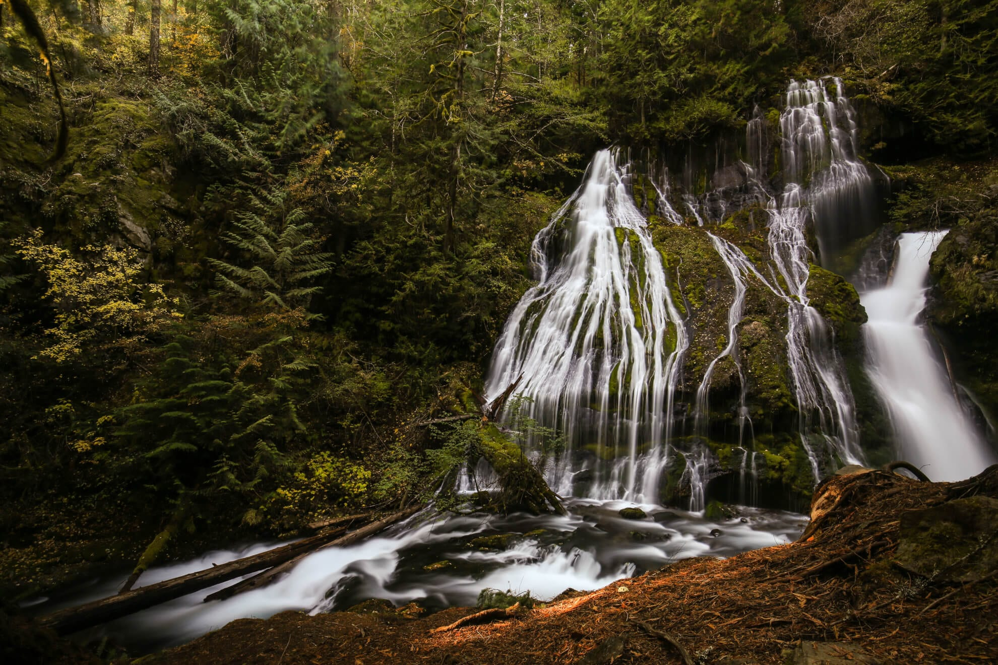 Waterfall in Old Growth Forest in Washington State