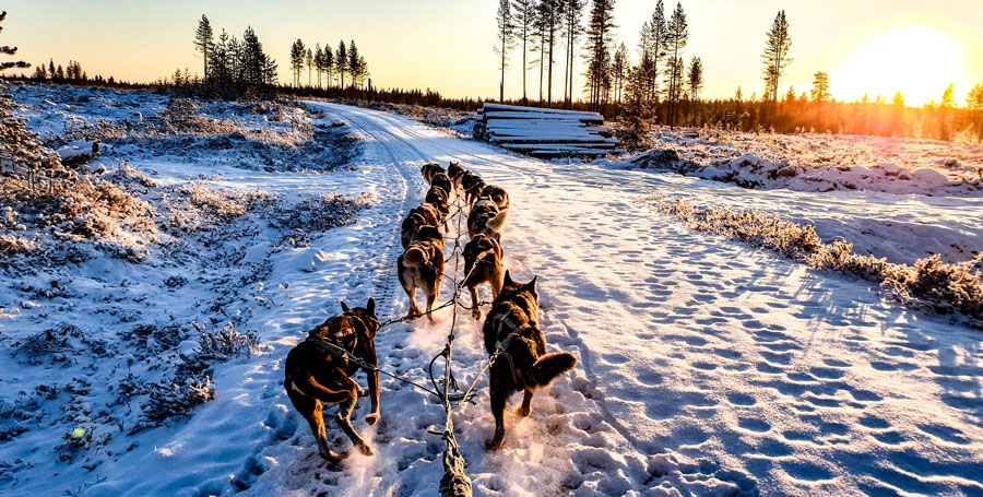 Dogsled team in winter at sunset