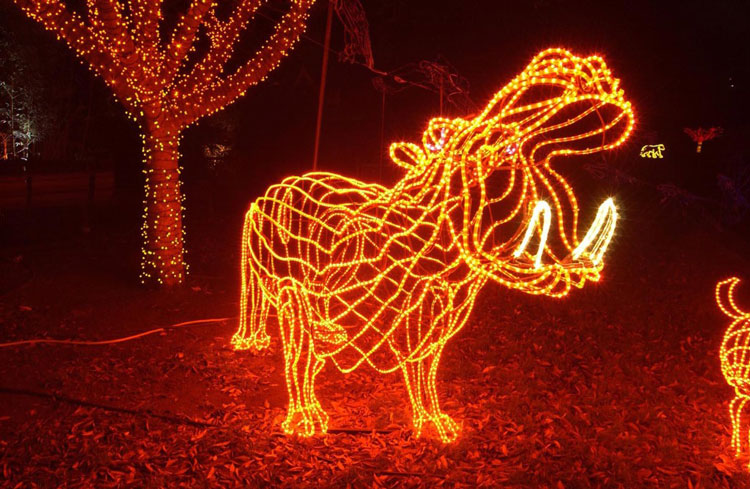 Portland Zoo Lights