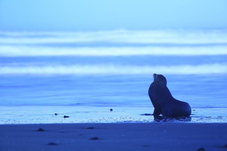 Sea Lion on Oregon Coast