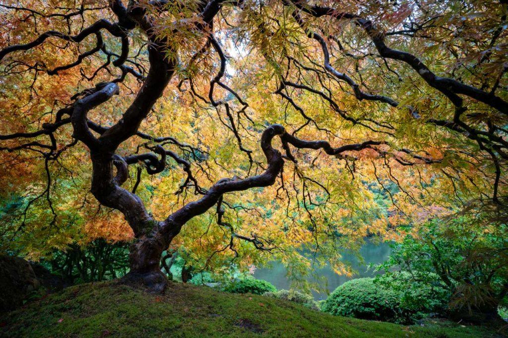 Visit the Japanese Gardens in Portland Oregon