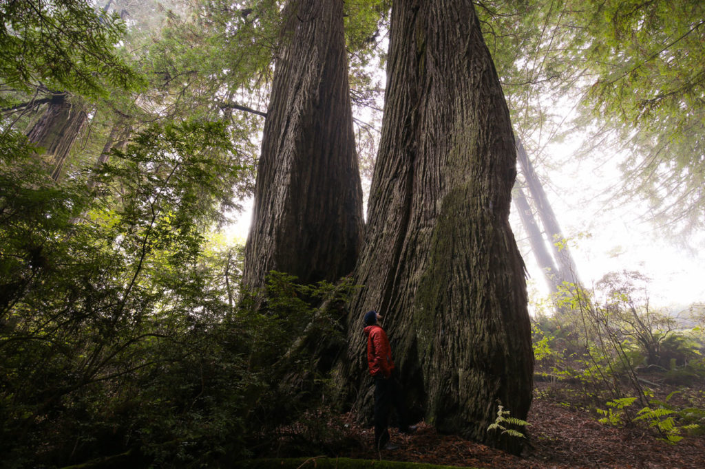 Old Growth Forest - Pacific Northwest