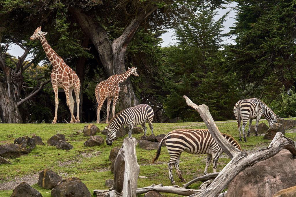 Portland Oregon Zoo