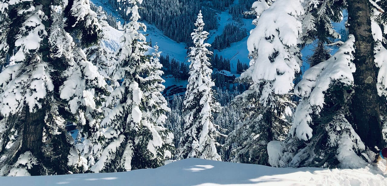 Winter Forest Pacific Northwest